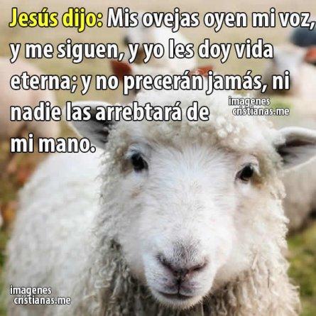 Mis Ovejas Oyen Mi Voz Jesus Reflexion