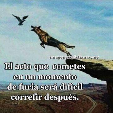 Imagenes Bonitas Con Frases De Perdon