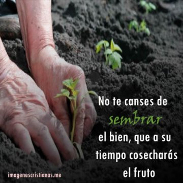 Imagenes Cristianas Aliento Caso Coronavirus Frases Biblicas