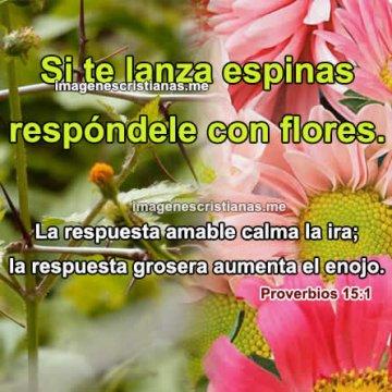 Reflexiones Cristianas Si Te Lanzan Espinas Dale Flores